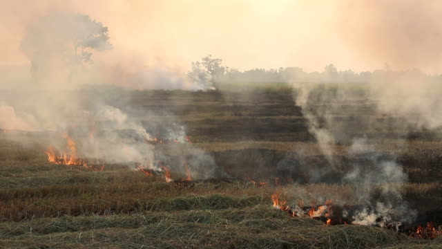 smoke from the burning of straw in the rice fields. - prairie stock videos and b-roll footage