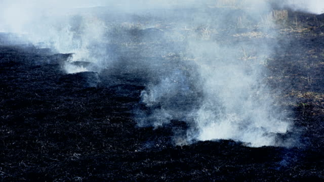 smoke line over black burned field - burning stock videos & royalty-free footage