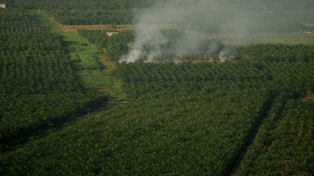 Smoke on Oil Palm Plantation, Malaysia