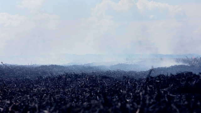 smoke over black burned field - cenere video stock e b–roll