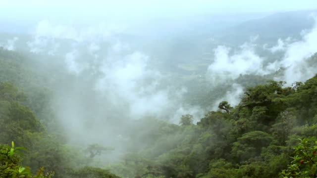 smoke over the rain forest - yucatan stock videos & royalty-free footage
