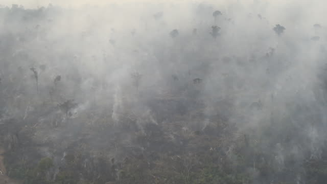 vidéos et rushes de smoke rises as a fire burns in the amazon rainforest in this aerial shot taken above porto velho, rondonia state, brazil, on friday, aug. 23, 2019.... - fragilité