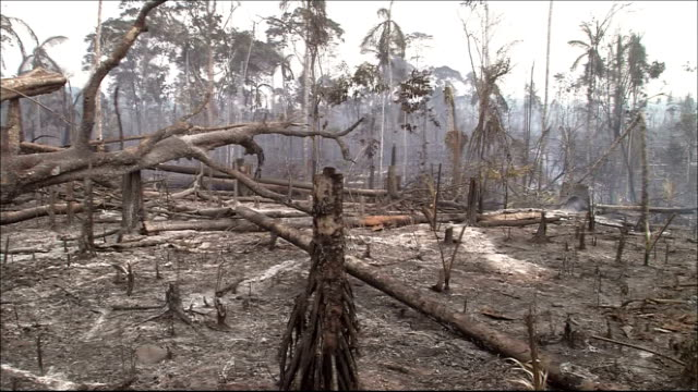vídeos de stock, filmes e b-roll de smoke rises from a burned out clearing in the amazon rainforest. amazon-jungle - destruição