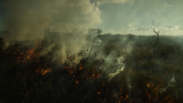 smoke rises from burning cerrado grassland. - cerrado stock videos & royalty-free footage