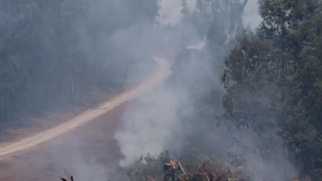 """smoke rises from forest after bushfires in new south wales - """"bbc news"""" stock videos & royalty-free footage"""