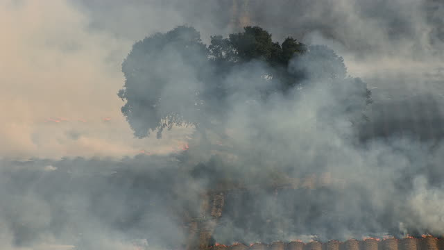 Smoke rises into the sky from a burning sugarcane field.