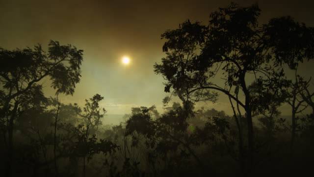 Smoke rises near silhouetted trees.
