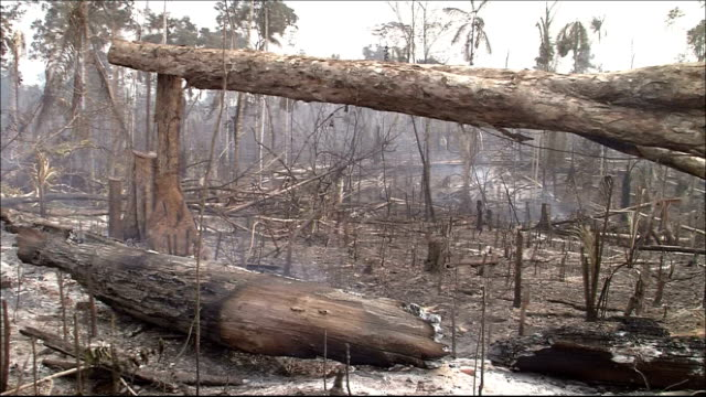 smoke rises off a smoldering tree in a burned rain forest. amazon-jungle - destruction stock videos & royalty-free footage