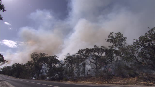 ws smoke rising from  trees during brushfire, road in foreground, west head, new south wales, australia - forest fire stock videos & royalty-free footage