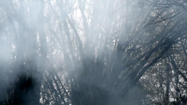Smoke through the Trees, woodland Fire