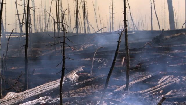 smoking aftermath of forest fire, yellowstone, usa - death stock videos & royalty-free footage