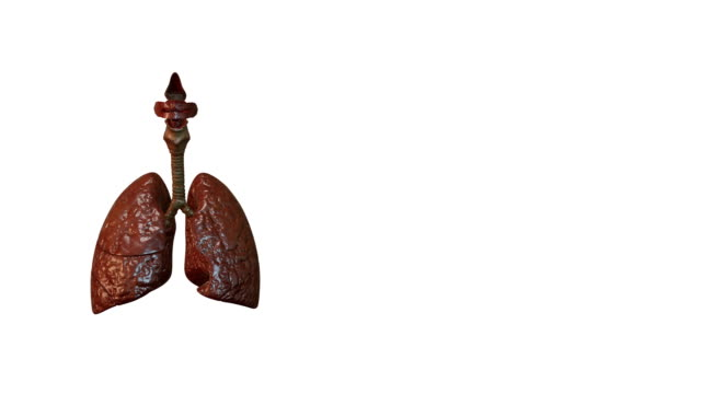 smoking lungs damage - lung stock videos & royalty-free footage