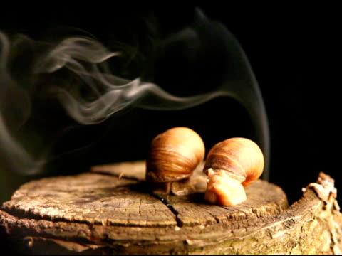 stockvideo's en b-roll-footage met smoking snails - ntsc - boomstronk