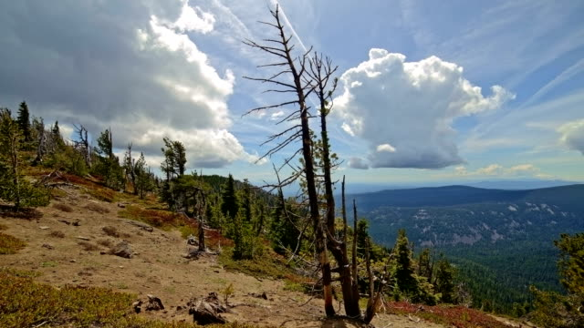 stockvideo's en b-roll-footage met snag dead tree after wildfire in forest near mt. hood - pacific crest trail