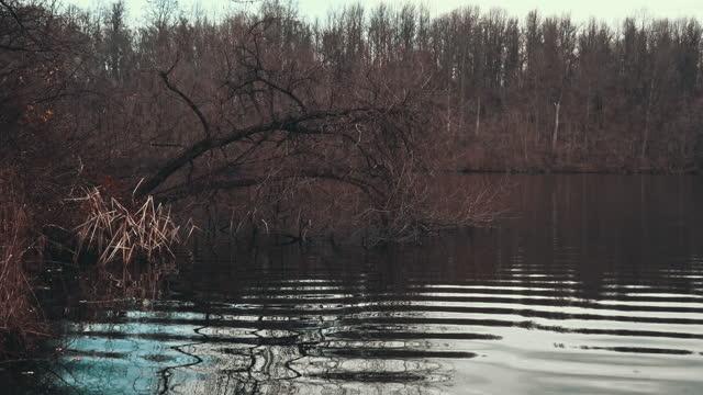 stockvideo's en b-roll-footage met hakboom in een reservoir van de kreek van het moeras - boomstronk