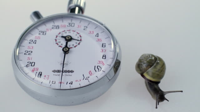 stockvideo's en b-roll-footage met slo mo ms snail and stopwatch on white background - de volgende stap