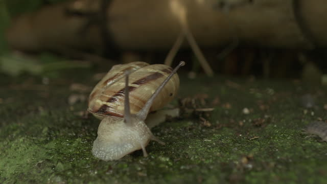 a snail at night - conch stock videos & royalty-free footage