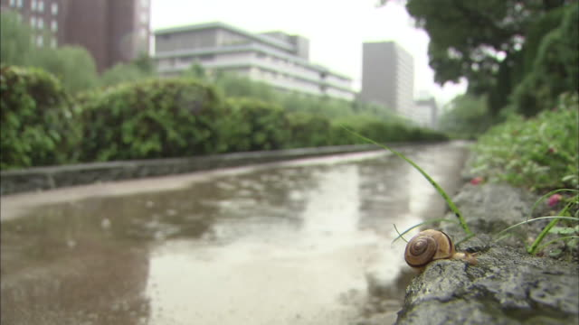 a snail clings to a stone wall in the rain. - snail stock videos & royalty-free footage