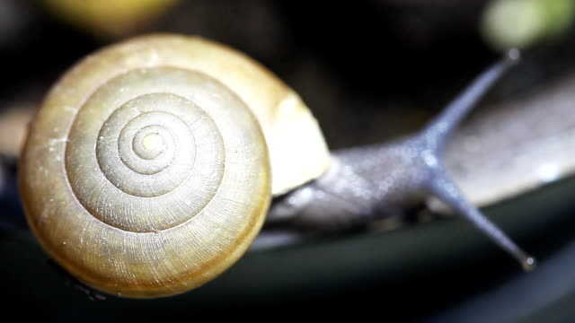 snail close-up - animal shell stock videos & royalty-free footage