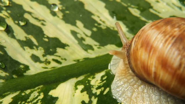 snail - copy space - animal imitation stock videos and b-roll footage