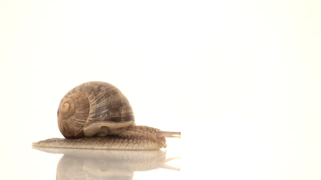hd snail crawling in studio - snail stock videos & royalty-free footage