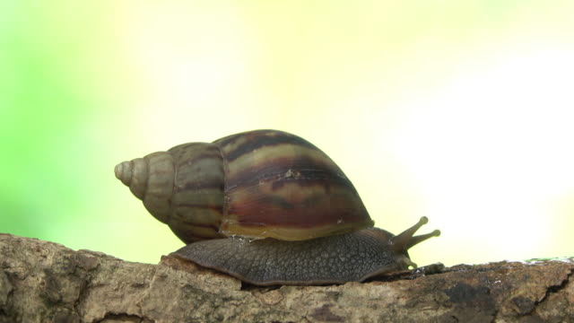 Snail crawling on a branch