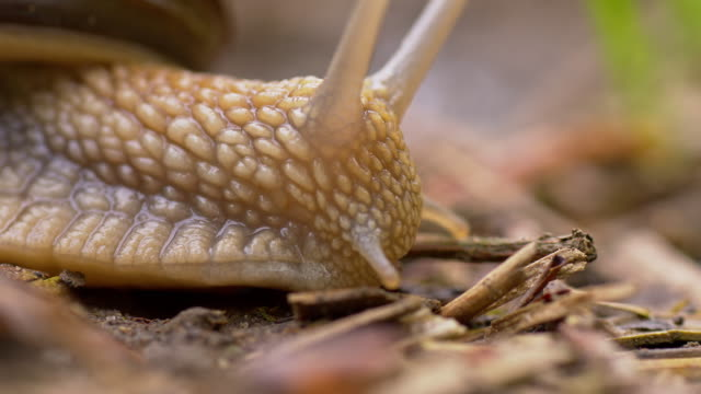 snail crawling on the ground - snail stock videos & royalty-free footage