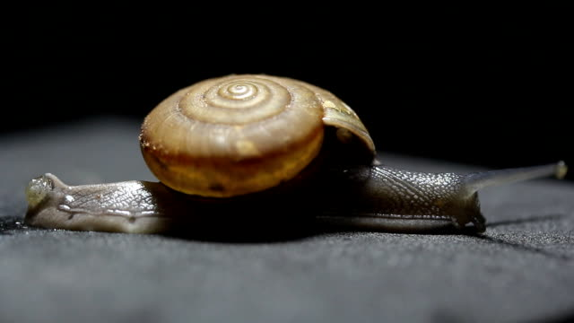 snail crawling - snail stock videos & royalty-free footage