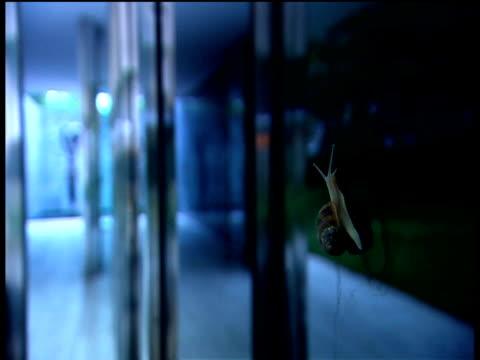 vídeos de stock, filmes e b-roll de snail crawls up window on modern building leaving slimy trail usa - gastrópode