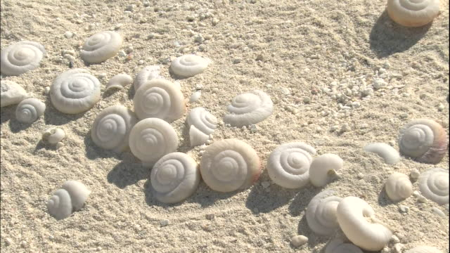 snail fossils scattered. - seashell stock videos & royalty-free footage
