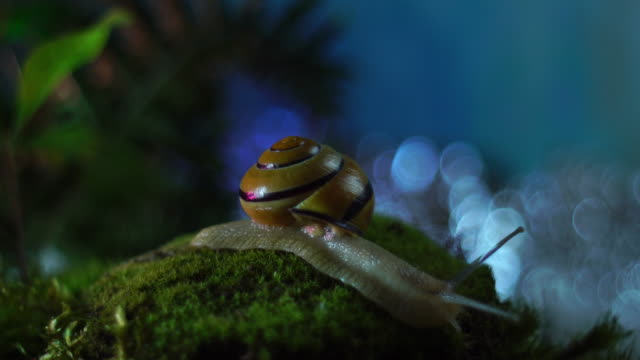 Snail in a fairytale forest