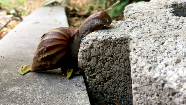 snail in different view. - piggyback stock videos & royalty-free footage