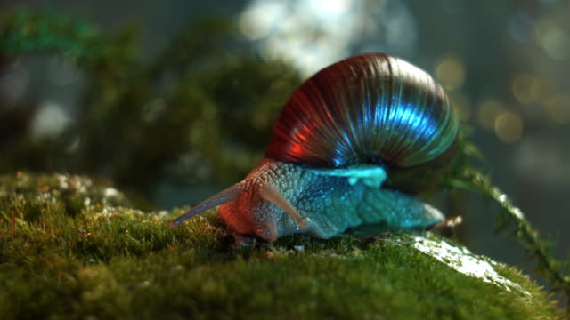 snail in the forest - snail stock videos & royalty-free footage