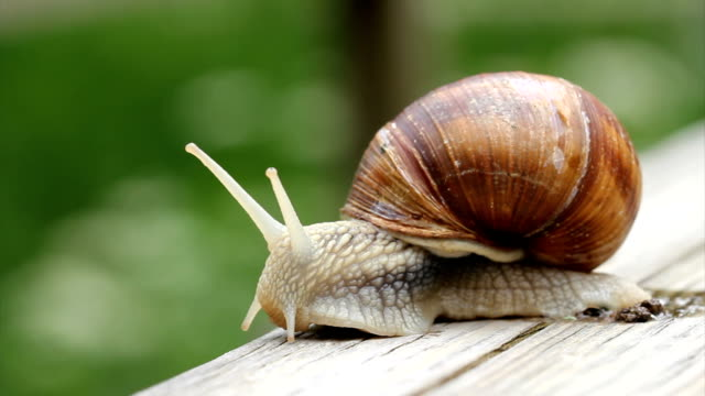 snail macro hd - snail stock videos & royalty-free footage