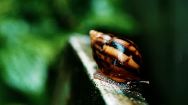 snail macro shot