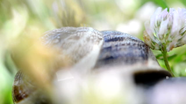 SERIES: Snail macro