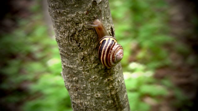 snail, meet mr. ant! - snail stock videos & royalty-free footage