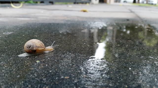 タニシ移動には、雨にはセメントの街