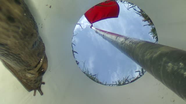 vídeos y material grabado en eventos de stock de ms snail moving slowly inside of golf hole / visby, nar, ljugarn, gotland, sweden   - bandera de golf