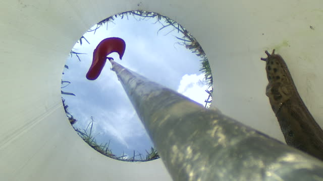 ms snail moving slowly inside of golf hole / visby, nar, ljugarn, gotland, sweden   - golf flag stock videos and b-roll footage