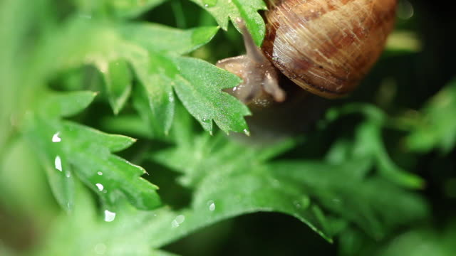 snail moving through leaves in studio city - studio city stock videos & royalty-free footage