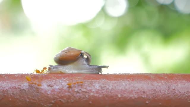 vídeos de stock e filmes b-roll de caracol mover - snail