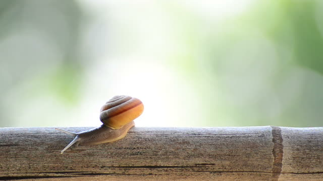 snail on a branch - mollusk stock videos & royalty-free footage