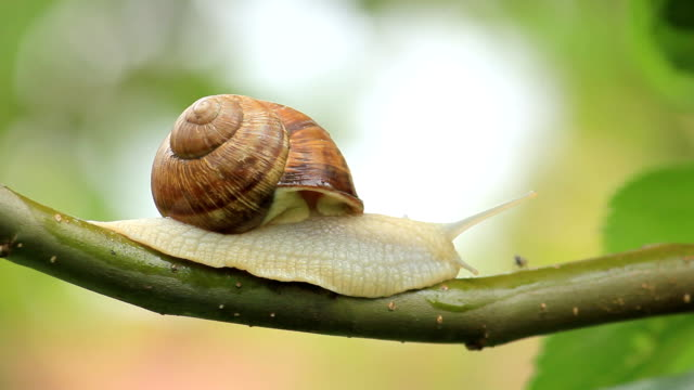 snail on a branch - snail stock videos & royalty-free footage