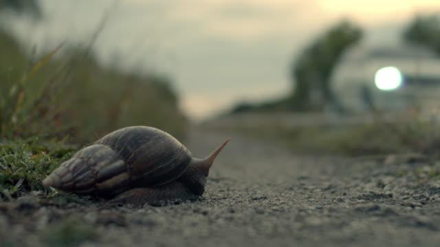 cu snail on a roadside - danger stock videos & royalty-free footage