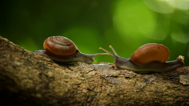 snail on a tree - snail stock videos & royalty-free footage