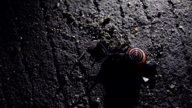 snail on floor at night - snail stock videos & royalty-free footage