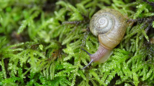 Snail on forest floor, close up