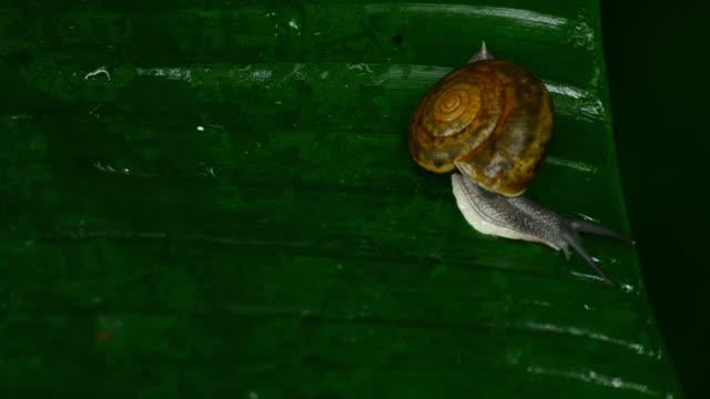 snail on leaf - mollusk stock videos & royalty-free footage