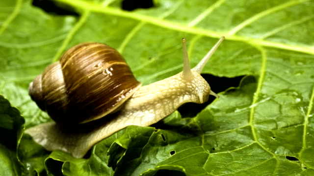 Snail on the leaf